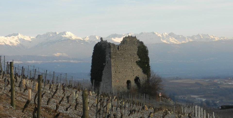 castel vineyards savoy