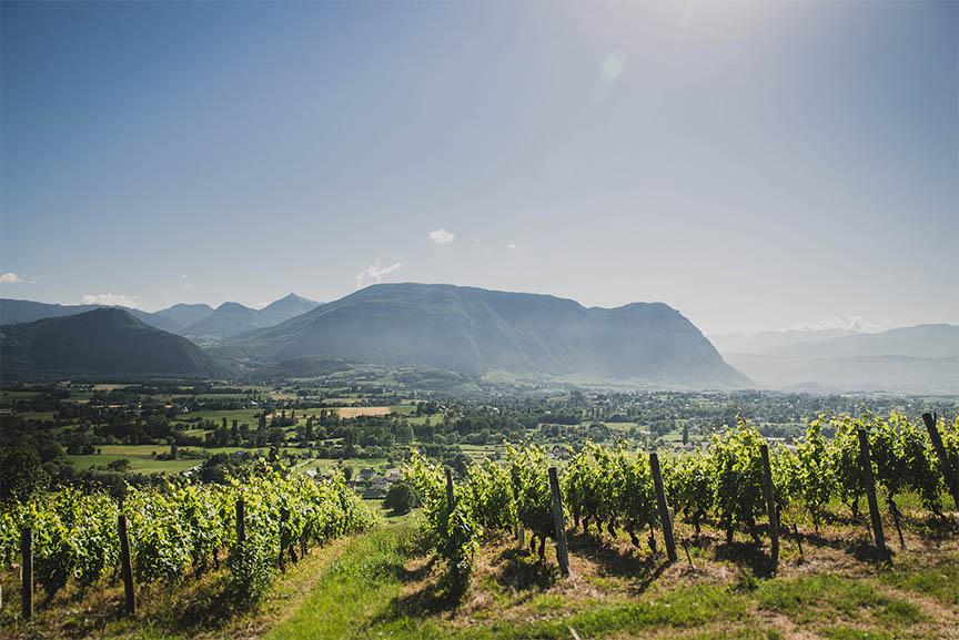 vignes d'apremont