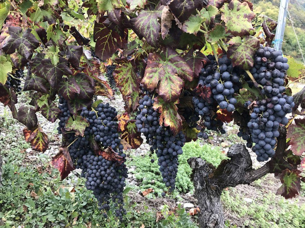 raisins savoie